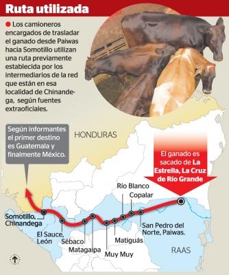 cattlenicaragua