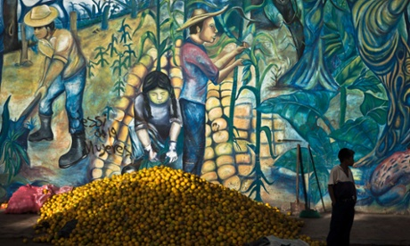 Farmers in Nicaragua need to diversify away from maize and beans to try fruit production and forestry. Photograph: Esteban Felix/AP