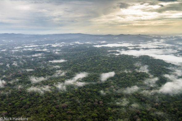 Aerial view of the Indio-Maíz Biological Reserve of Nicaragua.