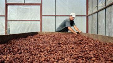 climatechange-cocoa-coffee